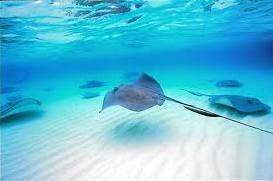 Human interaction threatens marine creatures
