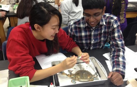 Juniors Jeevan Karamsetty and Grace Liu dissected their crab during class