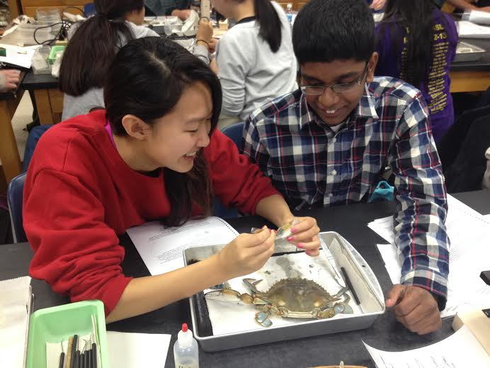 Juniors+Jeevan+Karamsetty+and+Grace+Liu+dissected+their+crab+during+class