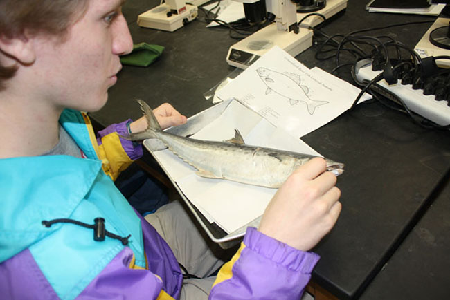 Students+examine+fish+in+marine+biology+class