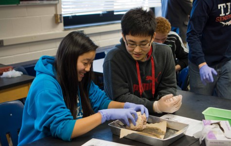 Freshmen Margaret Zhao (left) and Sung Joon Park (right) learn how to dissect a sheep's heart.