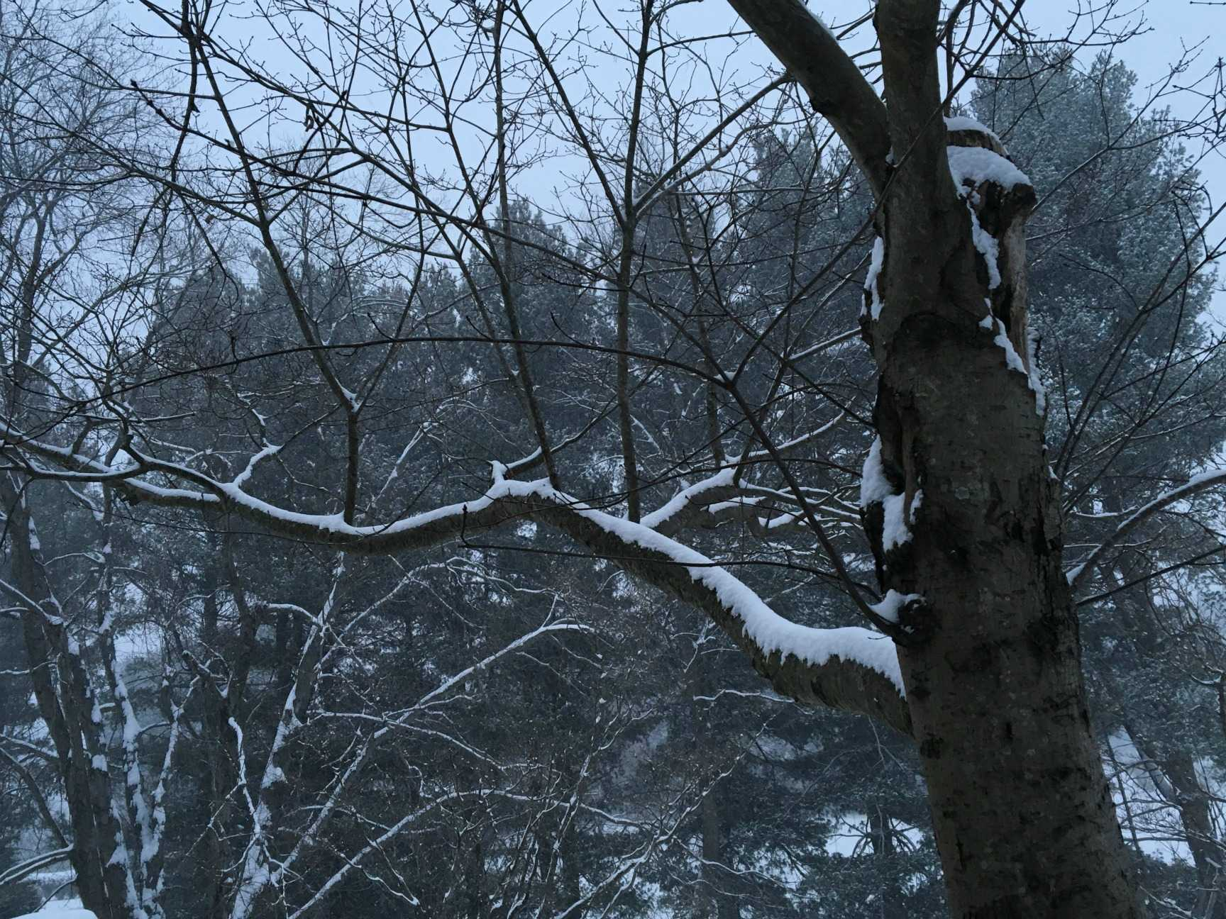 Snow blankets trees in the Fairfax County area.
