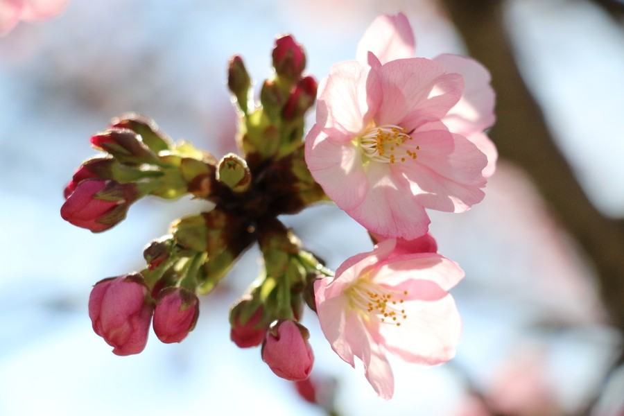 Cherry+blossom+buds+and+flowers+surrounded+many+parts+of+Washington+D.C.+on+March+25.