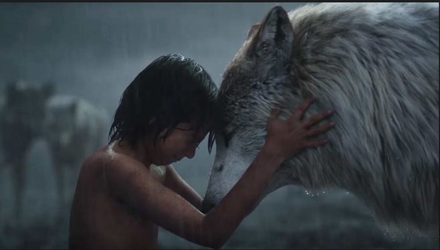 Photo courtesy of Disney. The new The Jungle Book movie was released on North America on April 15, 2016 and was generally well received by critics. The movie currently has a rating of 94% on Rotten Tomatoes, and a rating of 77% on Metacritic.