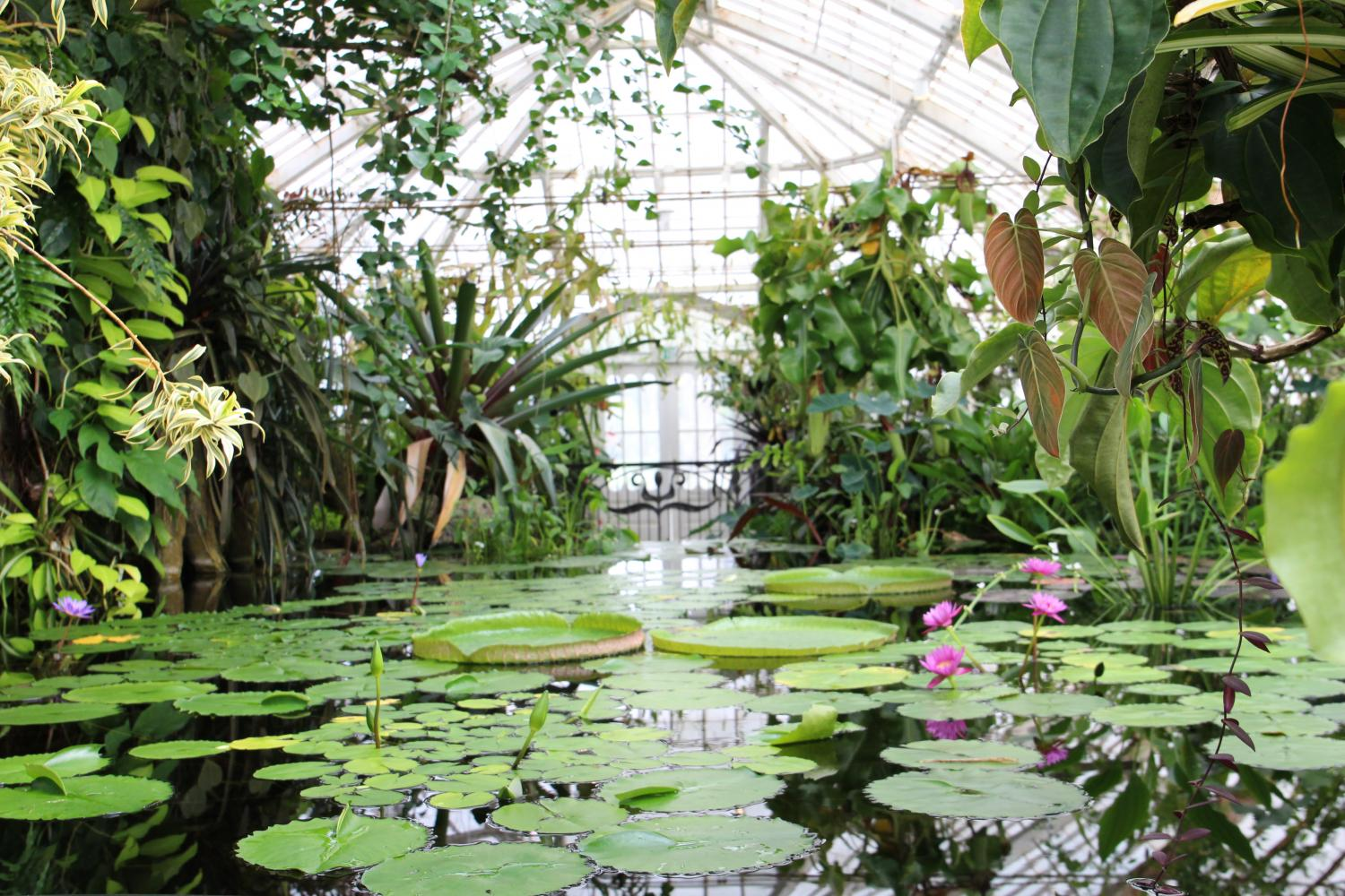 The Conservatory's Aquatics contains a myriad of diverse plants within its pond ecosystem, including the water lily.