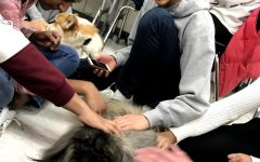 Stopping by during lunch, students spend time with the therapy dogs with smiles on their faces.