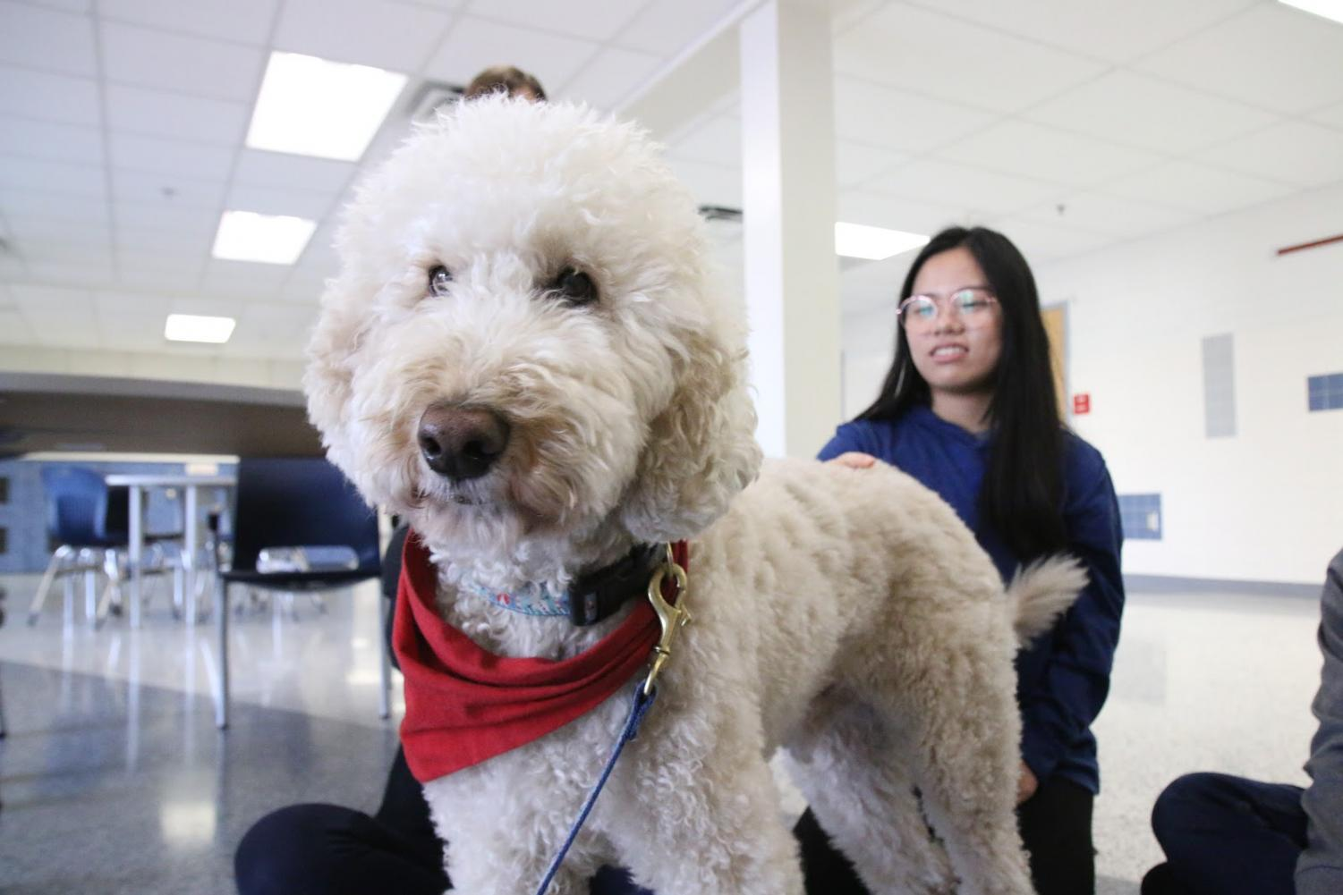 As APs come up, one good way to destress includes playing with your pets or the therapy dogs offered at TJ during Stress Less Laugh More week.