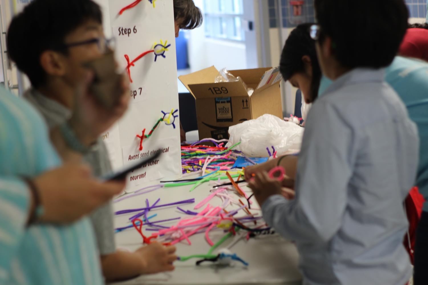 Elementary+school+students+create+neurons+out+of+pipe+cleaners+at+booth+hosted+by+Jefferson%27s+Neuroscience+Society.
