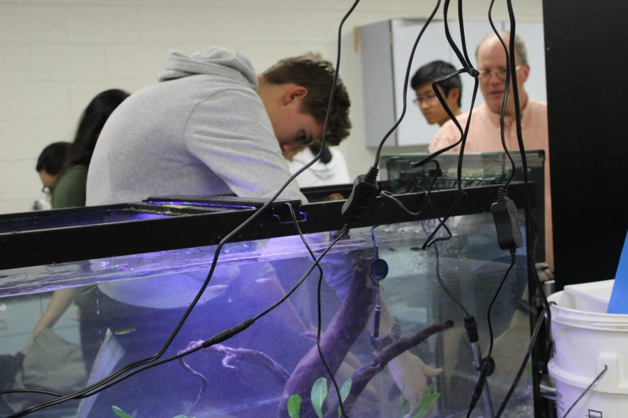 Leaning in, sophomore Blake Robinson explores the aquarium in the oceanography lab