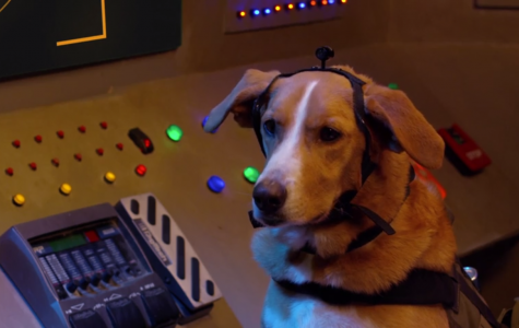 """Dog actor Good-Beasley in """"Agent Toby Barks"""". Image Courtesy of IMDb."""