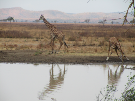 Africa is often generalized to be a continent of poor safari land with wild animals roaming about. But there is a greater diversity of nature ecosystems in Africa than most know, from deserts and mountains to forests and rainforests.